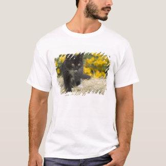 T-shirt Chaton aux cheveux courts noir et blanc sur la