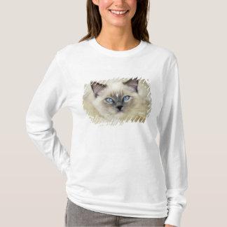 T-shirt Chaton de Ragdoll