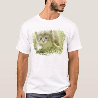 T-shirt Chaton prenant des mesures dans l'herbe