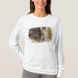 T-shirt Chaton tigré argenté, huit semaines de