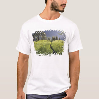 T-shirt Chemin dans le pré, parc national de Yosemite