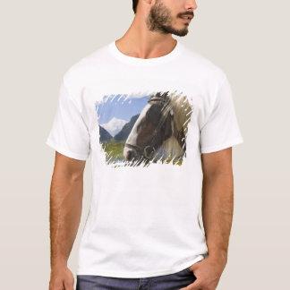 T-shirt Cheval, Gap de Dunloe, comté Kerry, Irlande