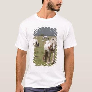 T-shirt Chevaux de Clydesdale dans un domaine, le