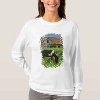T-shirt Chevaux de visionnement dans un domaine dans le