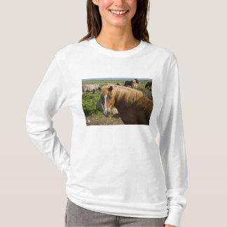 T-shirt Chevaux islandais en Islande du nord-est
