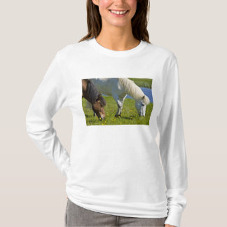 T-shirt Chevaux islandais en Islande occidental