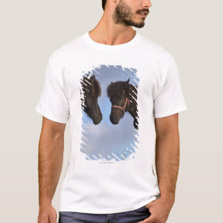 T-shirt Chevaux islandais se faisant face