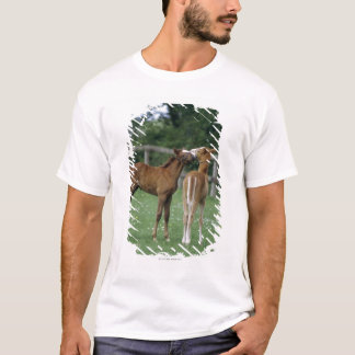 T-shirt Chevaux - pur sangs, poulains,