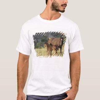 T-shirt Chevaux sauvages au parc national de Theodore
