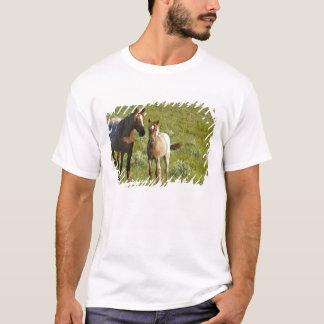 T-shirt Chevaux sauvages au ressortissant de Theodore