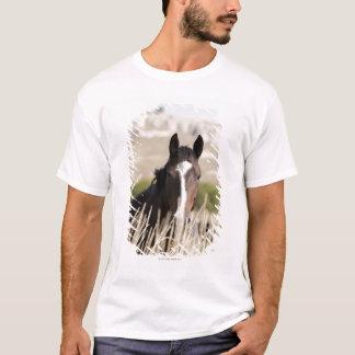 T-shirt Chevaux sauvages dans le Dakota du Sud