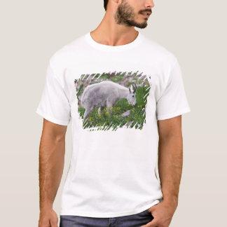 T-shirt Chèvre de montagne, Oreamnos américanus, adulte