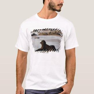 T-shirt Chien afghan dans la plage de Deba, Guipuzcoa,