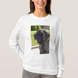T-shirt Chien de Mastif de l'anglais dans Bryon, Ohio