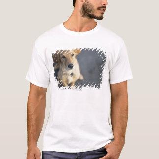 T-shirt Chien recherchant