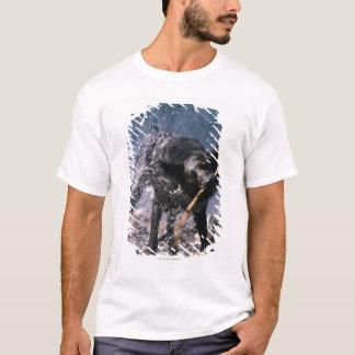 T-shirt Chien secouant l'eau de son manteau