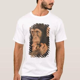 T-shirt Chimpanzé (troglodytes de casserole). Jeune