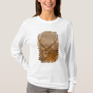 T-shirt Chital ou Cheetal, cerf commun repéré, pâturage