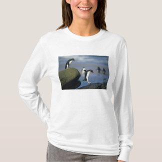 T-shirt Chrysocome de pingouins, d'Eudyptes de