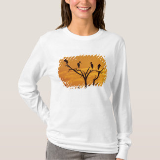 T-shirt Cigogne en bois, Mycteria americana, adultes à