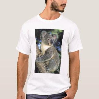 T-shirt Cinereus de koala, de Phascolarctos), l'Australie,