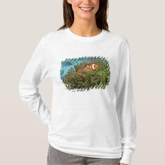 T-shirt Clownfish occidental (ocellaris d'Amphiprion),
