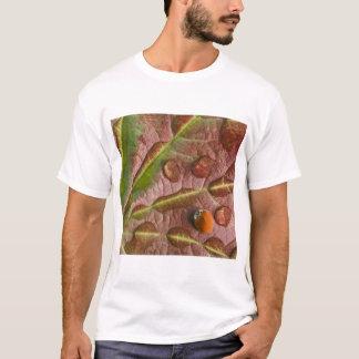 T-shirt Coccinelle sur la feuille d'érable couverte de