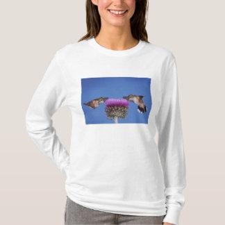 T-shirt colibri Large-coupé la queue, Selasphorus