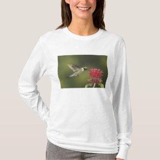 T-shirt colibri Large-coupé la queue, Selasphorus 2