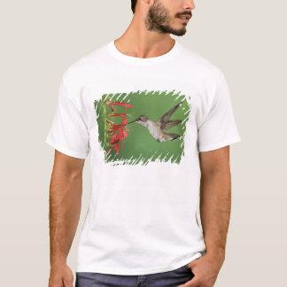 T-shirt Colibri Noir-chinned, Archilochus 2