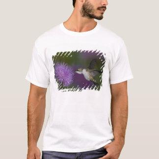 T-shirt colibri Rubis-throated en vol au chardon