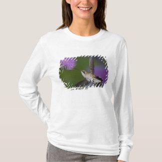 T-shirt colibri Rubis-throated en vol au chardon 2
