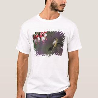 T-shirt Colibri throated rouge femelle en vol.