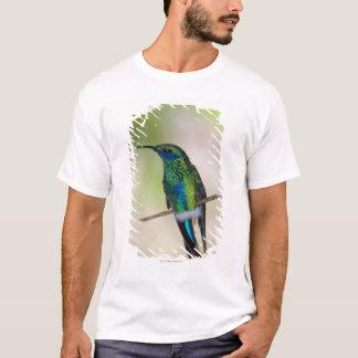 T-shirt Colibri vert de Violet-oreille