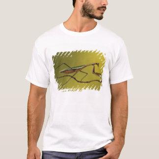 T-shirt Collines du Michigan, Rochester. Mante de prière