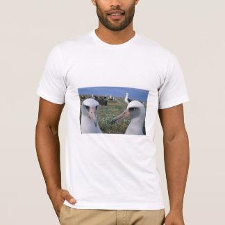 T-shirt Colonie d'albatros de Laysan
