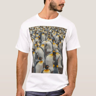 T-shirt Colonie de pingouin de roi, Malouines