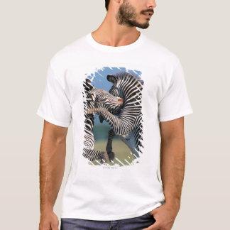 T-shirt Combat de zèbres (burchelli d'Equus)