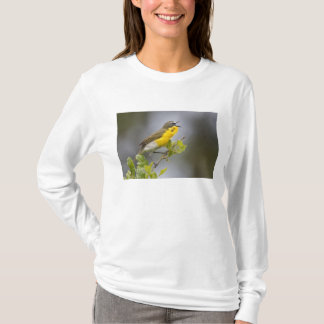 T-shirt Conversation Jaune-breasted (virens d'Icteria)