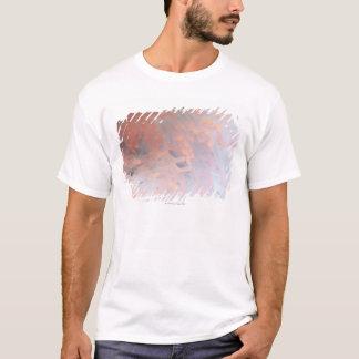 T-shirt Corail de Gorgonian 4