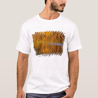 T-shirt Couleurs d'automne en parc d'état de Maplewood