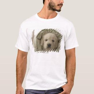 T-shirt Coussin autour de chien