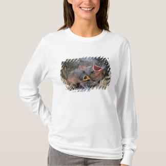 T-shirt Cowbird bronzé, aeneus de Molothrus, jeune dedans