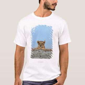 T-shirt Cratère de Ngorongoro, Tanzanie