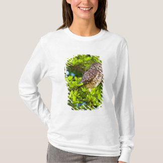 T-shirt Creusant les hiboux sont un site populaire sur