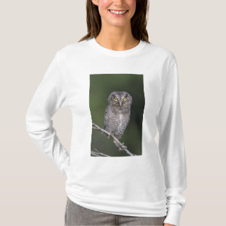 T-shirt Cri strident-Hibou oriental, asio de Megascops,