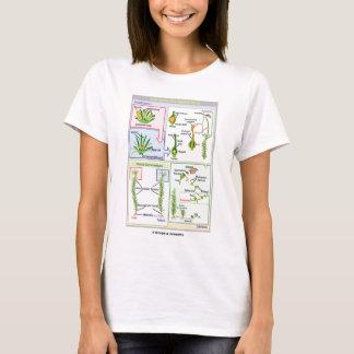 T-shirt Cycle de vie d'une mousse typique (Bryophyte)