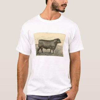 T-shirt d'Aberdeen Angus