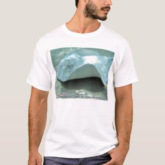 T-shirt Dasyatis americana (pastenague du sud albinos)