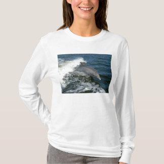 T-shirt Dauphin de Bottlenose